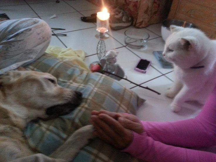 Humane Cat Euthanization