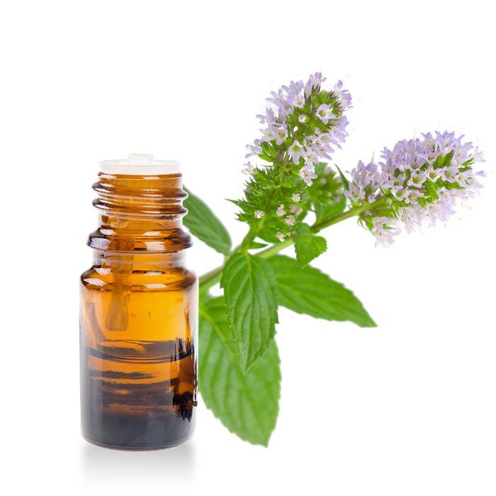 Menthe Poivrée : Facilite la digestion, anti-nauséeuse, anti-inflammatoire...Découvrez toutes les infos utiles sur l'huile essentielle de menthe poivrée ici