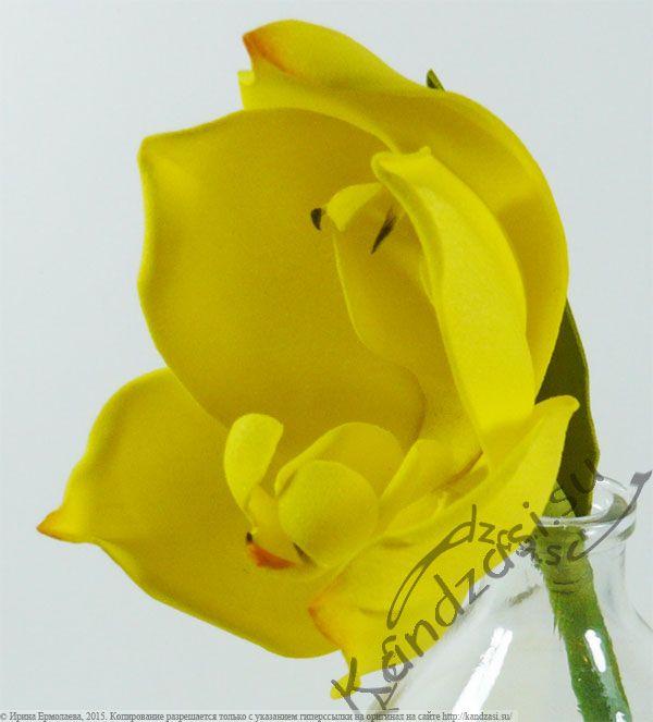 Мастер-класс изготовления из фоамирана орхидеи-тюльпана Ангулои Клоуза, поэтапные фото