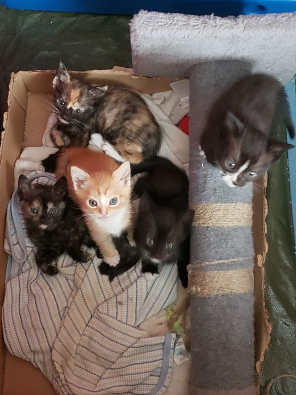 Kittens For Sale In Elma Wa Offerup Cats And Kittens Kitten