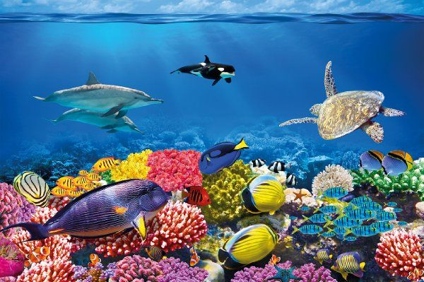 Underwater world aquarium reef fisheye photo wallpaper for Diving and fishing mural