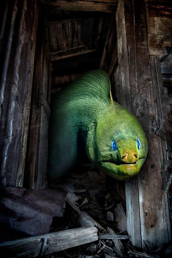 Moray eel. Form scuba diving magazine Facebook site.