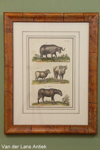 Antieke gravure door Johnston 26366 bij Van der Lans Antiek op www.lansantiek.com.