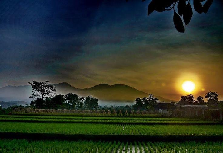 Sunrise by Renie A. Priyanto - Landscapes Sunsets & Sunrises ( mountains, sunrise, sunrise and mountains, rice fields, fields )
