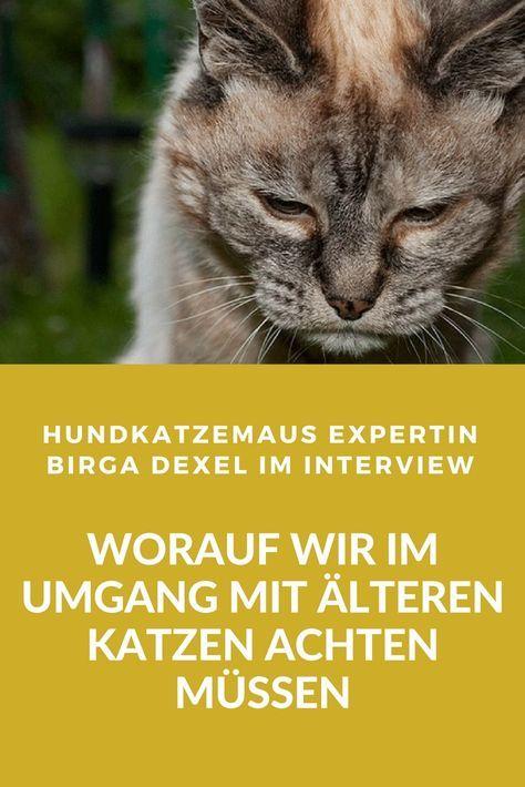 Interview mit Birga Dexel: Worauf wir im Umgang mit älteren Katzen achten müssen