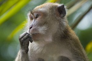 Monkeys will soon be kidnapped from their native home for the purpose of being housed in a cruel lab's breeding facility. Time is running short to save them. Sign this petition and demand an immediate halt to this project.