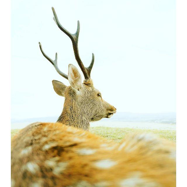 【kazuto.photography】さんのInstagramをピンしています。 《No.248 「これ、どうやって撮ったの?」と目を惹きつける1枚を常に頭の中で意識している。  #deer #鹿  #動物 #癒し #nara #奈良#Photo #写真 #癒し系 #若草山 #photographer #写真家  #narapark #奈良公園 #光 #森 #淡い #自然 #木 #tokyocameraclub #team_jp #team_jp_西 #instagramjapan  #ig_japan #icu_japan #ink361 #igworldclub #Canon》