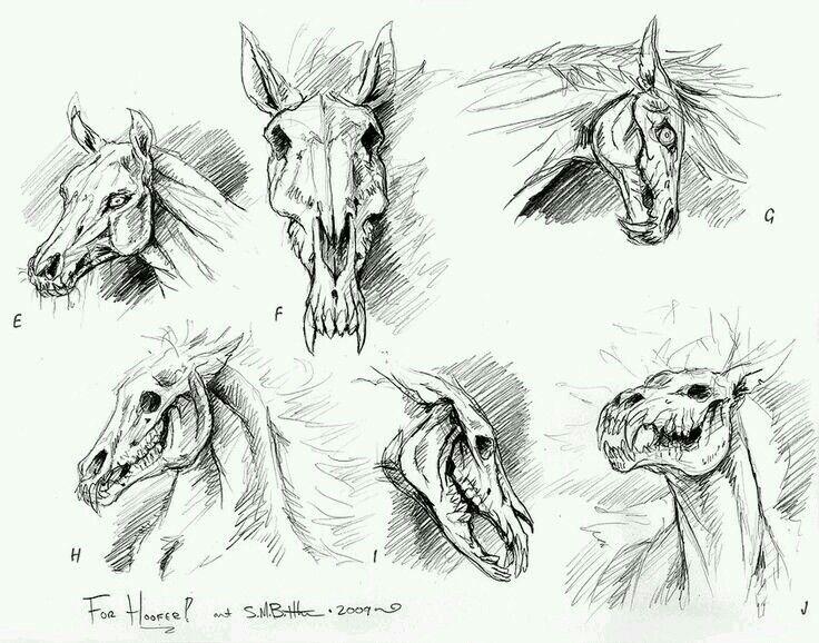 Resultado de imagen para dibujo de craneo de caballo