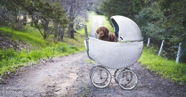 Pare dedizer aos casais jovens que eles precisam ter filhos
