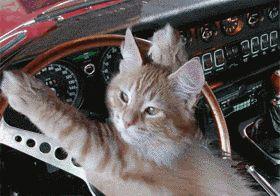 geico car insurance toledo ohio