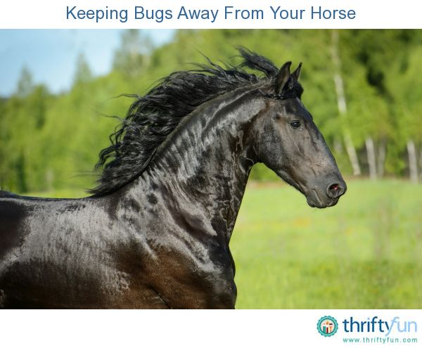 This guide is about keeping bugs away from your horse. A horse can attract flies, mosquitos and gnats whether in the barn, the field or when you are riding it.