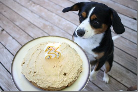 my dog is getting this dog cake for a birthday. or maybe christmas. surely she should enjoy thanksgiving, too? what about tonight? maybe i should make her this tonight.: Cakes Recipes For Dogs, Dog Cakes, Bananas Pb, Dogs Birthday Cakes, Enjoying Thanksgiving, Birthday Cake Recipes, Birthday Cakes Recipes, Dogs Cakes Recipes, Doggies Cakes