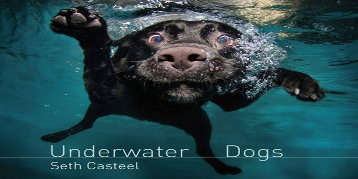 Подводные собаки: фотографа Сета Кастила