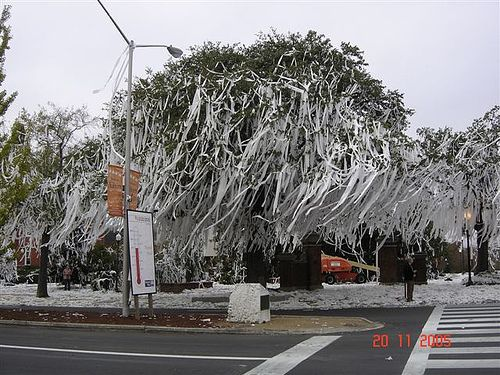 I'm not an Auburn football fan but I started my college years at Auburn.  This is Toomers Corner the way I will always remember it.  I loved those trees and Toomer's Corner was my favorite part of Auburn when I first visited there.