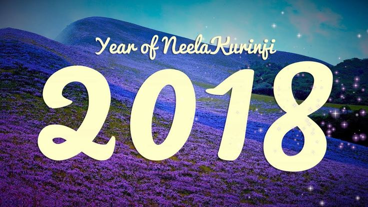 The beautiful hills of Munnar, #Kerala once again welcome people from across the planet to view the monumental phenomenon of the blooming of the Neelakurinji flower, which appears once in every 12 years, and can only be witnessed in Munnar.