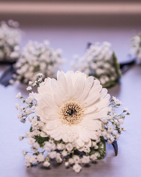 Boutonniere  baby's breath for the bridal party baby's breath + gerbera daisy for the groom.Bouquets and Boutonnieres by Barbara's Floral http://www.floristmukilteo.com/ Photo by Laura-Lee Gerwing http://www.mycityphotos.ca