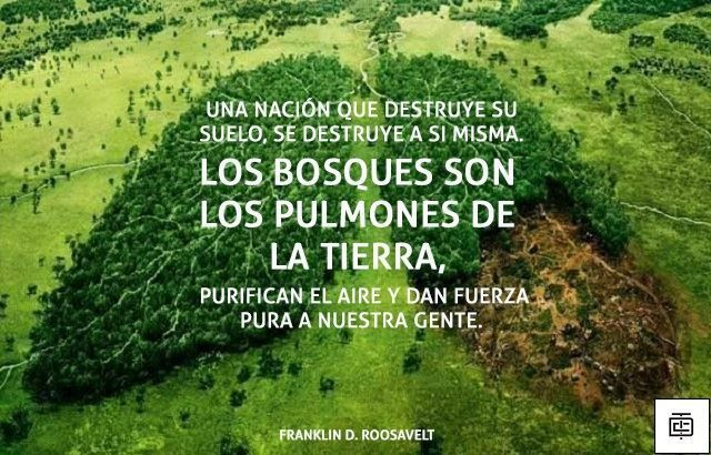 Cuidemos La Pachamama Frases Ambientales Medio Ambiente Frases Frases Naturaleza