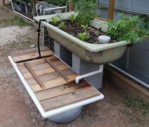 bathtub aquaponics diy fish and food pic murray h easy aquaponics by eg