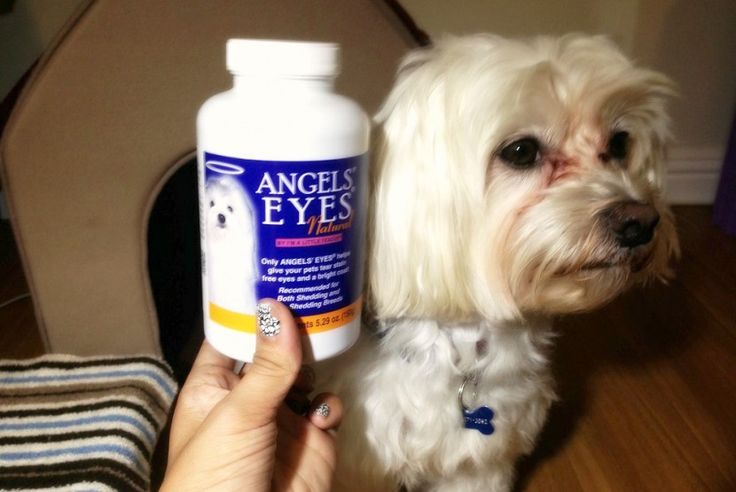Dog tear stains how to keep your dogs eyes clean dog