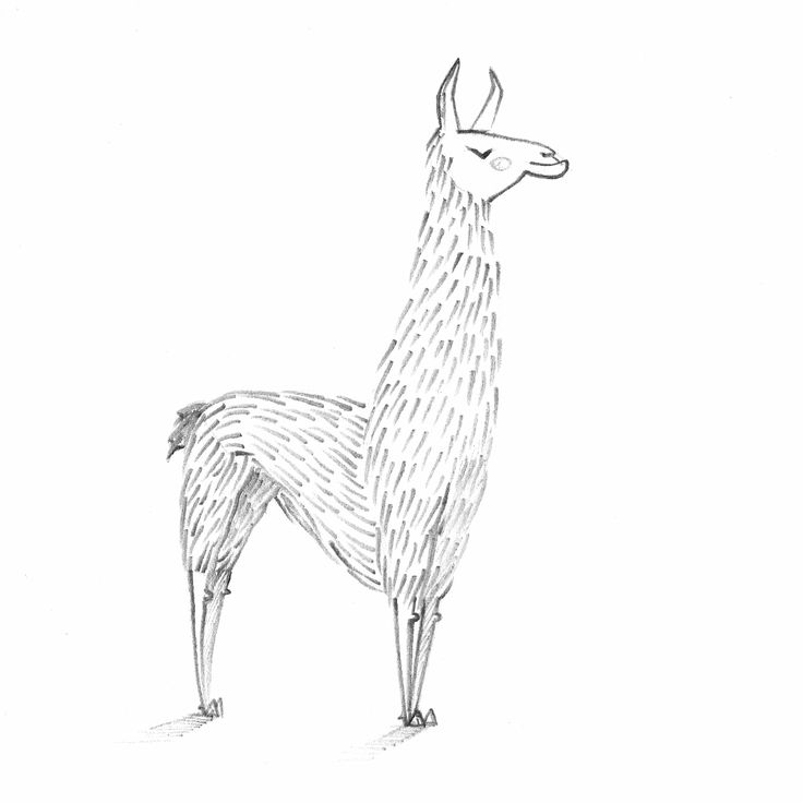 30 Day Drawing Challenge  Day2: Favorite Animal (Llama).