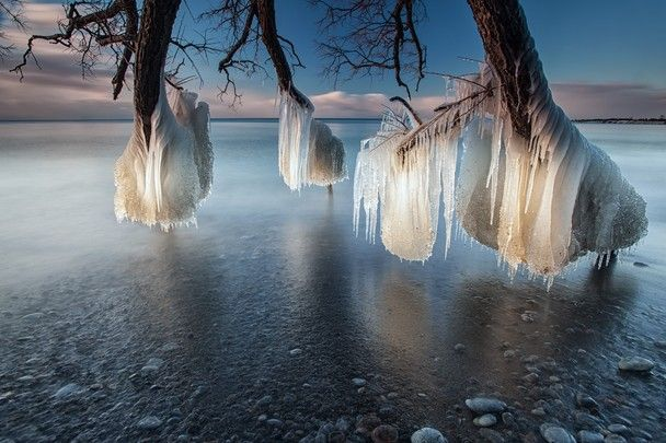 Tree of Ice Photo and caption by charles corbin  Taken on the shores of Lake Ontario , Whitby , Canada . A fallen tree stretches out into the lake and as a combination of ice cold water and freezing temperatures hit the tree its freezes on contact and in time creates some beautiful ice structures Location: Whitby , Ontario , Canada