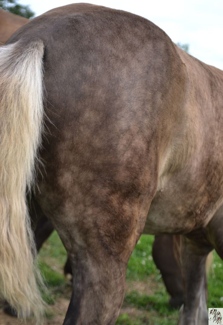 92 best rocky mountain horses images on pinterest rocky