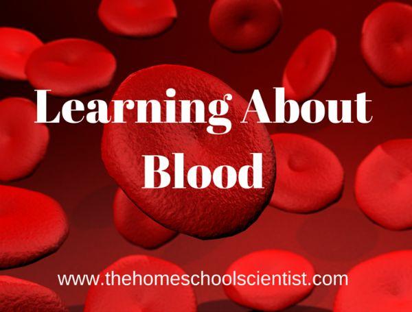 197 Best Homeschool Anatomy Images On Pinterest School Science