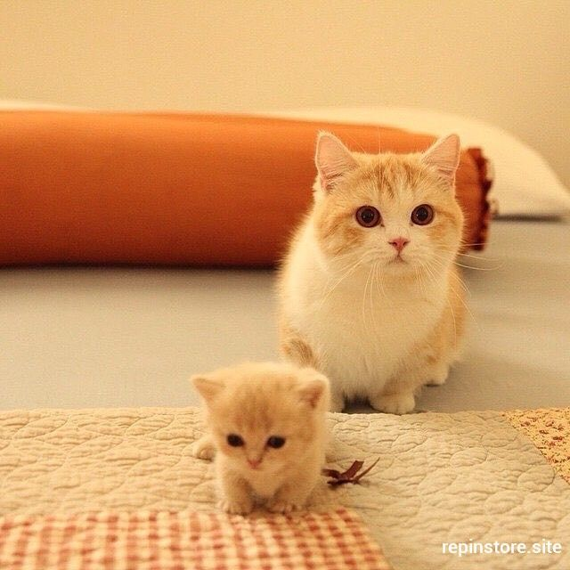 kitty cats kitten kittens แมว 猫 ねこ ネコ 貓 고양이 Кот