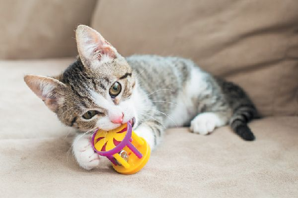 Treat Your Cat To Different Types Of Cat Toys Kitten Biting Cat Behavior Cat Behavior Facts