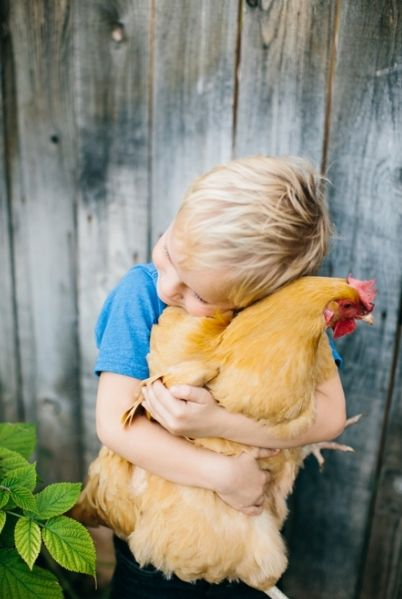 BISOU POULETTE. Poule. Calin. Enfant. Farm kid. Chicken kiss. Chicken hug.