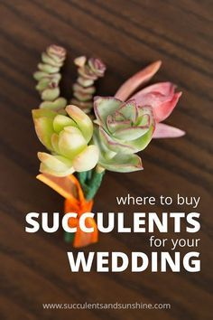 SUCCULENTS TO BUY!!!