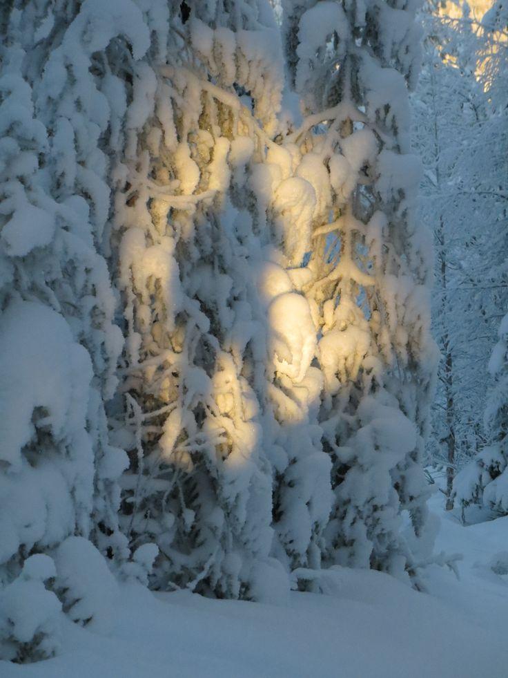 Kuusamo forest