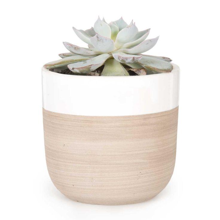 Succulent In Mini Ceramic