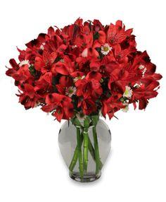 Passionate Peruvian Lily $50.00