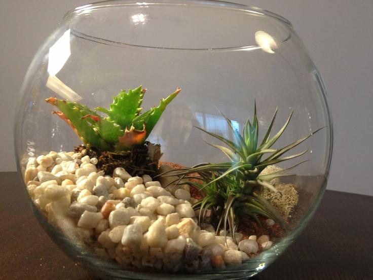 Large Plant Terrarium - 71 Best Apartment - Plants/pots/terrariums Images On Pinterest