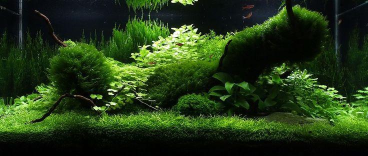 Amano Aquascape - Bing Images | Aquascape | Pinterest ...