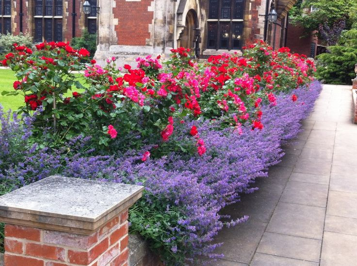 Rose Garden Ideas carolyne roehms rose garden at weatherstone inspiration for the future of olivias rose You Could Do A Yellow Floribunda Rose Behind A Row Of Lavender In The Front Of