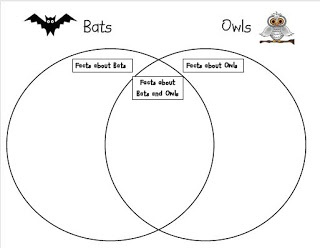 Adventures in Teaching: bats and owls