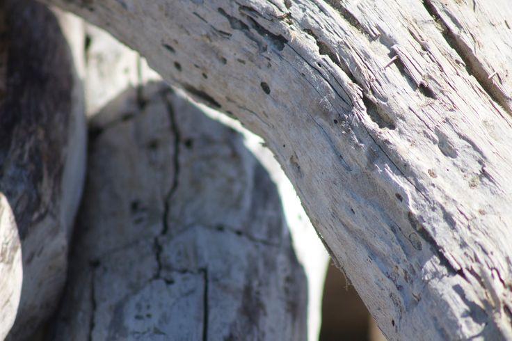 Driftwood textures #New Zealand #Waimarama