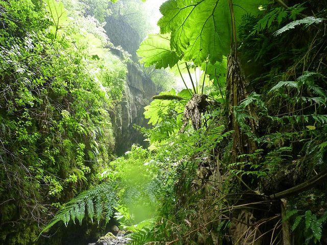 The Adventures of Alexander Selkirk - Quebrada Las Casas, isla Alejandro Selkirk