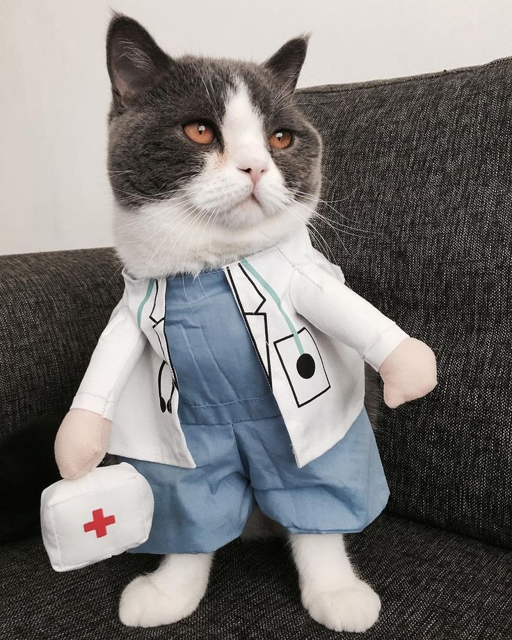$14.00    Humon: Doc Ruxpin I don't feel so good!  Doc Ruxpin: Have u tried to get more cats?  Humon: Whatchu mean?  Doc Ruxpin: Cats are the best medication! They heal you by purring and demanding all attention. You will forget everything soon and be healthy again!  Humon: I need a dozen purrrlease!  .  Thanks for@bocatbluecostume show  .  ⚕️Pet Doctor Costume⚕️