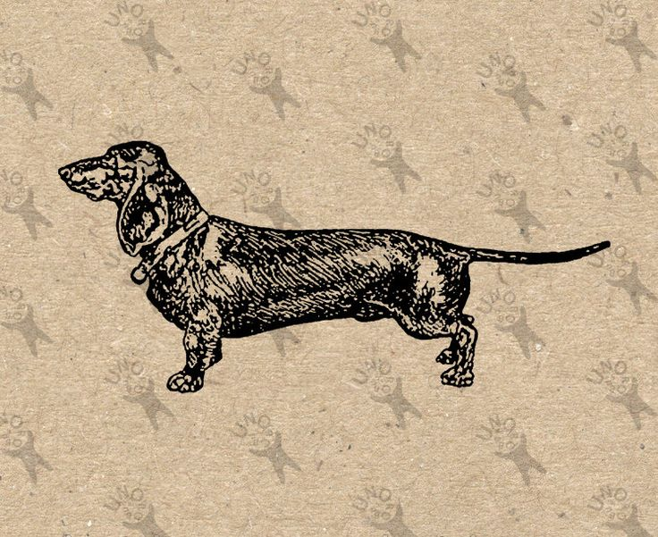 Vintage image Dogs Breed Dachshund Instant Download Digital printable clipart graphic Burlap Fabric Transfer Iron On T-shirt  HQ 300dpi by UnoPrint on Etsy
