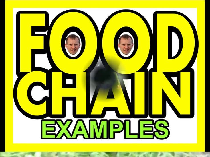 perfect for week 3 cycle 2 FOOD CHAIN SONG by Heath
