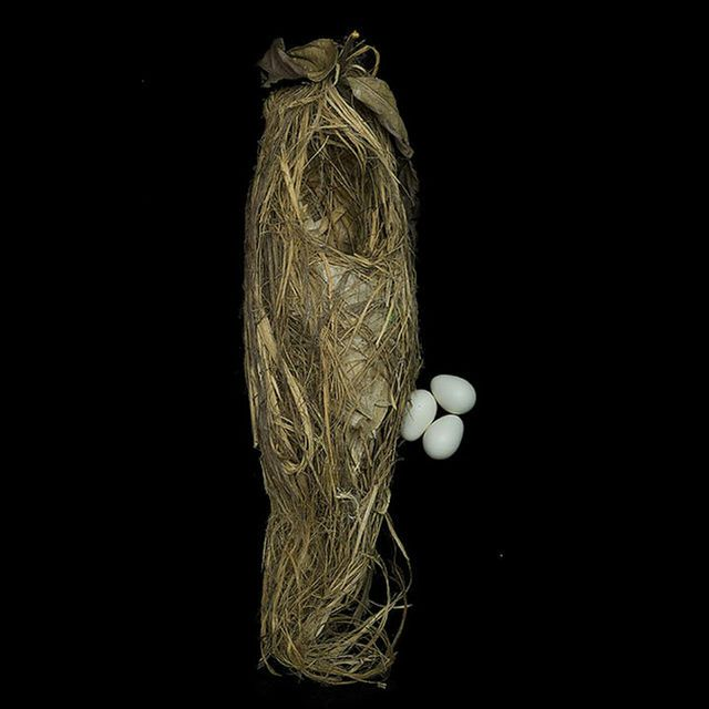 「鳥の巣」と言えば、モジャモジャとした髪型や北京オリンピックのメインスタジアムだった北京国家体育場(愛称が鳥の巣)など例えられたモノを思い浮かべるかもしれませんが、本物の鳥が作ったいろいろな鳥の巣の...