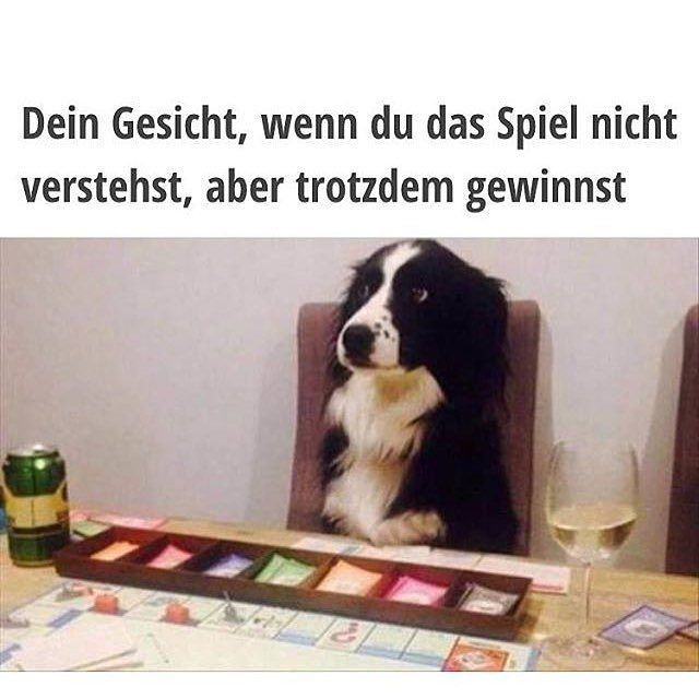 fd6bea81fd4a0d944133df402d3912d7 funny dog pictures funny animal pics 72 best border collies images on pinterest border collies, border