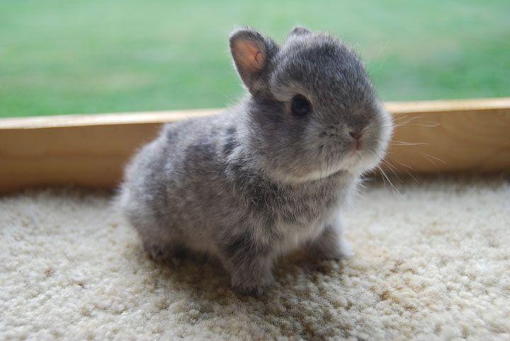 106-bebes-animaux-hyper-craquants-qui-vous-feront-fondre-de-tendresse29