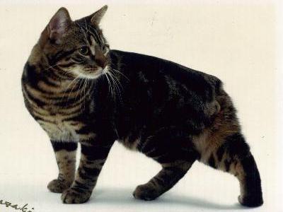 Manx cats.  I have 2.