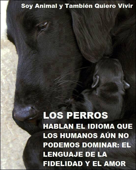 Soy Animal y También Quiero Vivir. Los perros hablan el idioma que los humanos aún no podemos dominar: El lenguaje de la fidelidad y el amor...