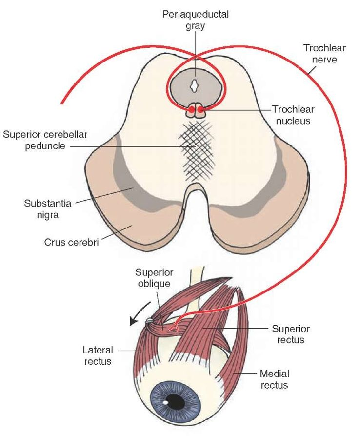 121 best Eye Anatomy images on Pinterest | Eye anatomy, Eyes and ...