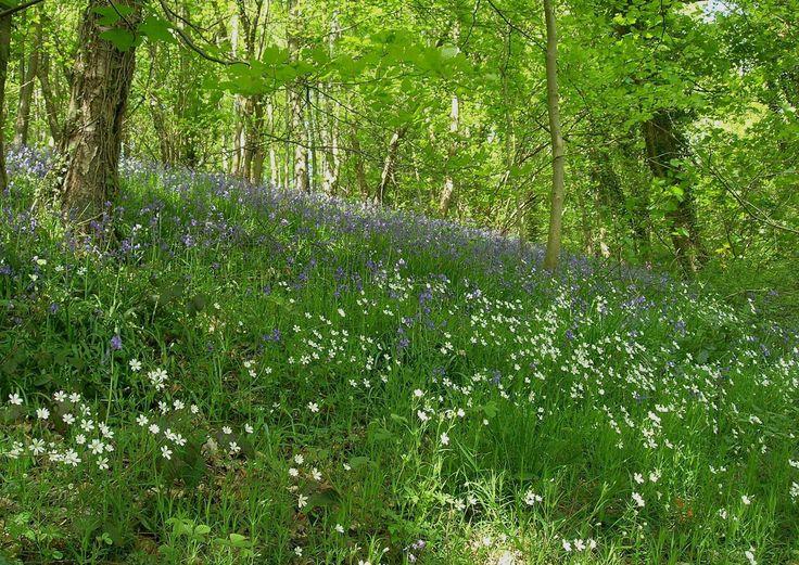 Wild flowers, Peak District